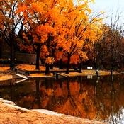 Autumn at The Forks