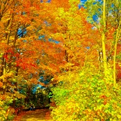 The splendor of autumn