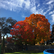 Perfect Fall Day