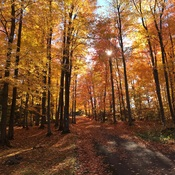 Fall in Rigaud, Quebec