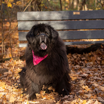 Tillie Enjoying a fall day in Kingston