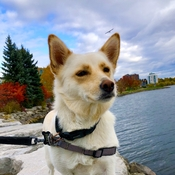 Suki on the Shore of Kempenfelt Bay