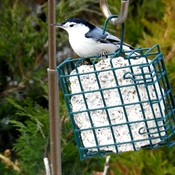 Suet Time!!