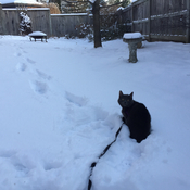 Kitten loves the snow!!! ❄️❄️