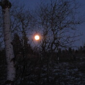 Almost full moon - Spruce Woods Prov Park