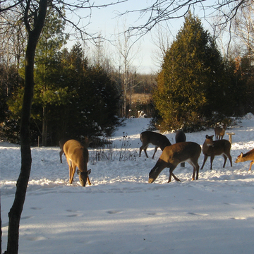 1st snow, 1st treats, 1st herd outside our cabin window