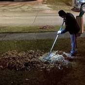 Night Raking