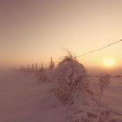 Fog along the fence line