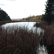 Amherst NS BIrd Sanctuary