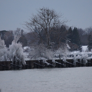 Frozen spray on bushes along Whitby Harbor breakwater wall!