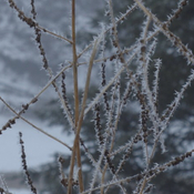 Hoarfrost this morning