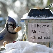 Blue Jay gets a present.