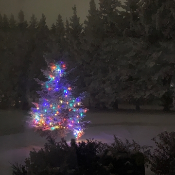 Christmas tree in the Frost