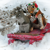 Squirrel and cousin toboganning.