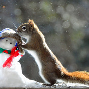 Squirrel puts on snowman's hat.