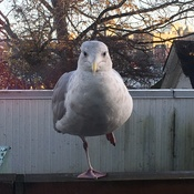 One legged bird