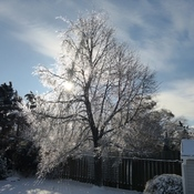 First Ice storm of December 2019