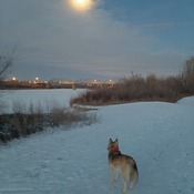 Mya morning walk at minus 35