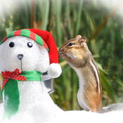 Chippie whispers to the snowman.