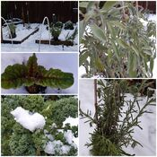 Winter Herbs and Veggies