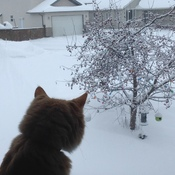 Grande Prairie morning, cat watching bird, -32C outside