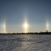 Great Prairie Sundog