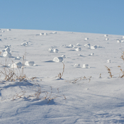 More snow rollers