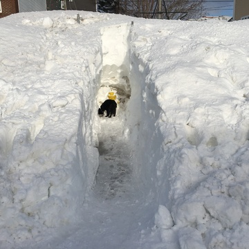 Dig out your fire hydrants even after a state of emergency in nfld