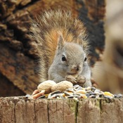 gimme more peanuts