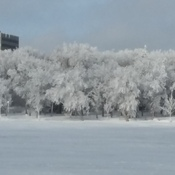 frost in wascana park