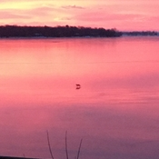 Coyote on the ice on St Lawrence river in Kingston this morning at sunrise