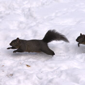 Squirrels enjoying a great mild winter day.