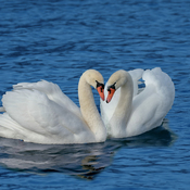 Love is in the lake
