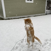 Louie catching snowballs