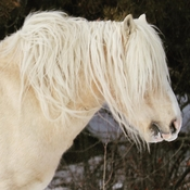 Feral Horse