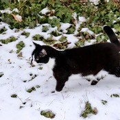 Boots Cat in snow.