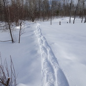 My Snow Shoe Swamp Route.