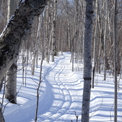 Freshly Groomed Ski Trail