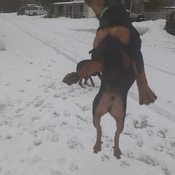 Trying to catch snowballs