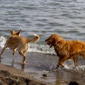 Dogs at Woodbine Beach