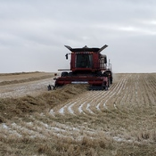 Family Day, we finished combining our Durum