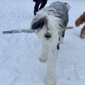 Finding sticks in the snow