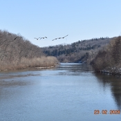 Springbank Park - geese in flight