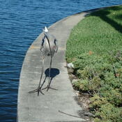 Blue Heron Waterside south at coquina key, florida