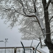 snow ladened tree