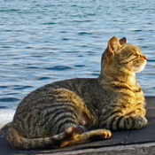 Sea Cats ~ Split, Croatia