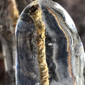 Crystal iced twig