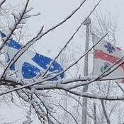 Flags Under Snow