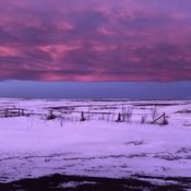 Pink Chinook arch