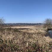 Serpentine Fen